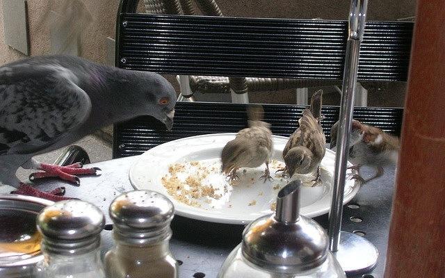 birdseating