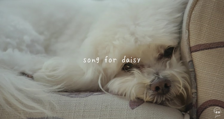 the most calming music for dogs ever created