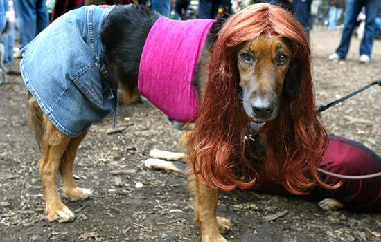 female_dog