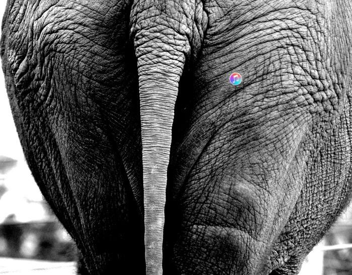 elephant_butt