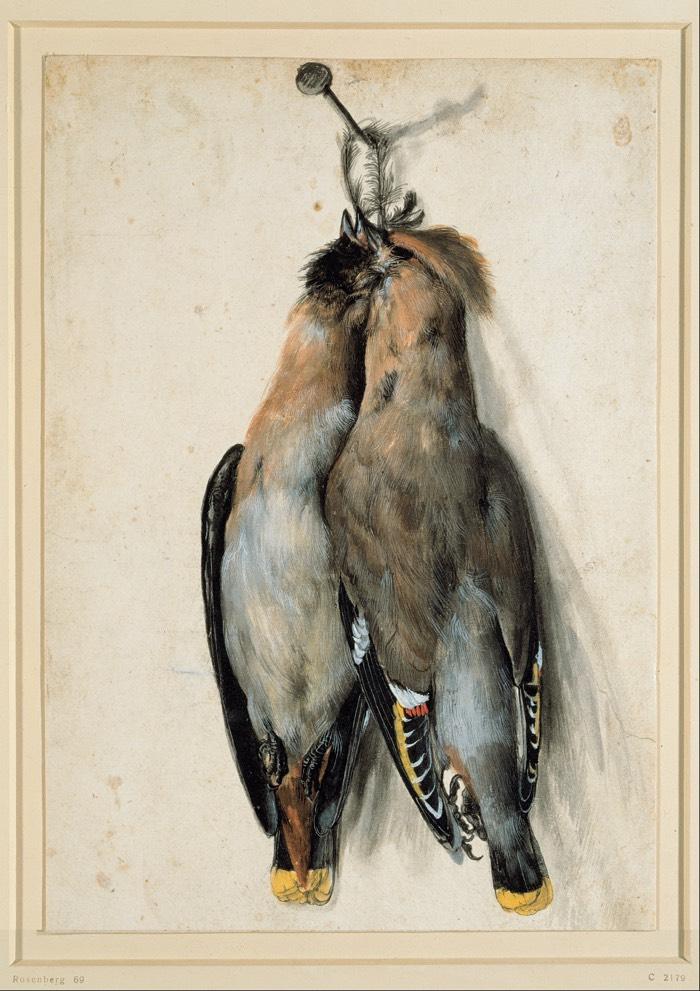 two_dead_birds