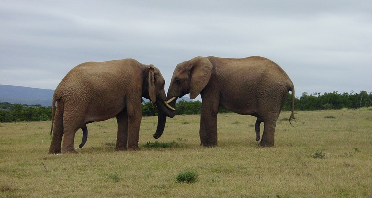Facebook + Sony/ATV: the two elephants have decided to dance.