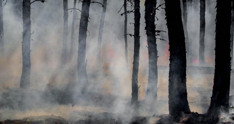 Metallica wildfire relief