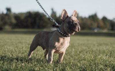 Lady Gaga dogs stolen