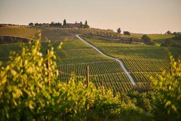 Sting tuscan estate wine